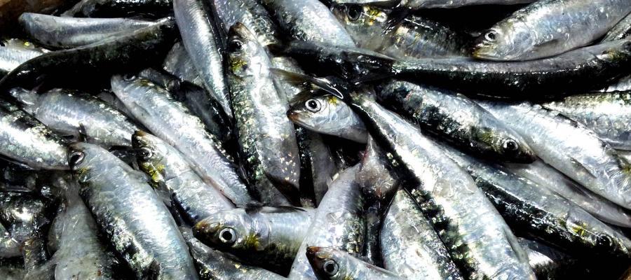 Actualidad Actualidad Cinco grandes ventajas de comer pescado pequeño