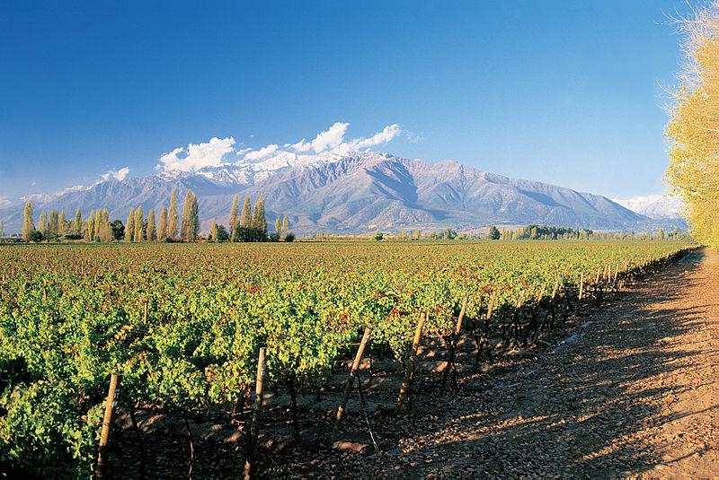 Vinos Vinos Los países con los mejores vinos del mundo